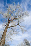 La helada cubrió árboles Fotos de archivo libres de regalías