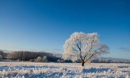 La helada cubrió el árbol Imagenes de archivo