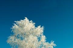 La helada cubrió el árbol Imagen de archivo libre de regalías