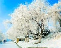 La helada cubrió el árbol Fotografía de archivo