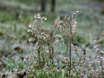 La helada en la hierba después de la lluvia sobrefundida Fotos de archivo