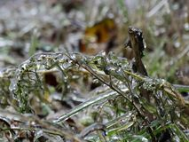 La helada en la hierba después de la lluvia sobrefundida Imágenes de archivo libres de regalías