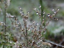 La helada en la hierba después de la lluvia sobrefundida Foto de archivo