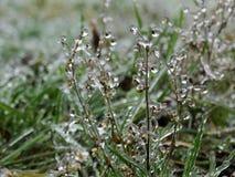 La helada en la hierba después de la lluvia sobrefundida Imagen de archivo