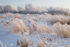 La helada en los arbustos Imagenes de archivo