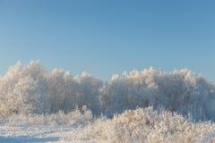 La helada en los arbustos Imagen de archivo libre de regalías