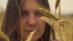 La hembra de la cosecha del trigo mira in camera en el símbolo del fondo de la salud de la mujer de la fertilidad almacen de video
