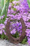 La herradura oxidada delante de porciones de primavera púrpura florece Fotografía de archivo