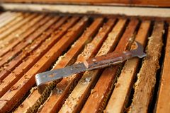 La herramienta del apicultor pone en colmena de madera abierta Recoja la miel Concepto de la apicultura imagenes de archivo