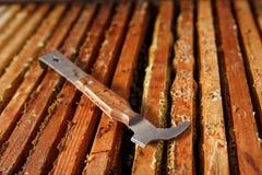 La herramienta del apicultor pone en colmena de madera abierta Recoja la miel Concepto de la apicultura imágenes de archivo libres de regalías