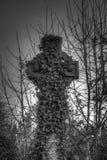 La hiedra cubrió el cementerio cruzado de Bradford Imagen de archivo