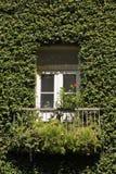 La hiedra cubrió el detalle de la casa Fotos de archivo