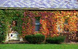 La hiedra cubrió la cabaña en otoño Fotos de archivo
