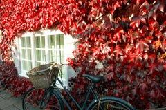 La hiedra cubrió la cabaña en otoño Foto de archivo libre de regalías