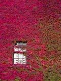 La hiedra cubrió la pared de ladrillo Dubuque Iowa Foto de archivo
