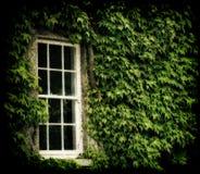 La hiedra cubrió la ventana Fotografía de archivo libre de regalías