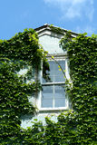 La hiedra cubrió la ventana con el cielo Fotografía de archivo