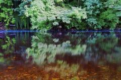 La hiedra, las hojas y los árboles reflejaron en agua inmóvil Imágenes de archivo libres de regalías