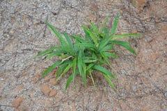 La hierba Foto de archivo