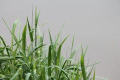 La hierba Foto de archivo libre de regalías