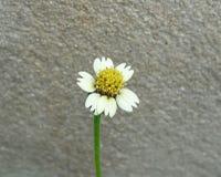 La hierba Fotografía de archivo