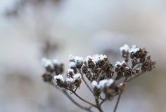 La hierba acodó con los cristales de hielo en invierno Foto de archivo