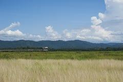 La hierba con la montaña se nubla el cielo azul Fotos de archivo libres de regalías