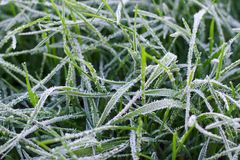 La hierba congelada cubrió con escarcha foto de archivo libre de regalías