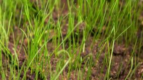 La hierba crece de suelo almacen de metraje de vídeo