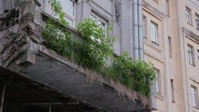 La hierba crece del edificio almacen de metraje de vídeo