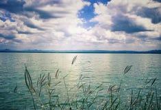 La hierba crece en el lago con la opinión de cielo azul Fotos de archivo libres de regalías