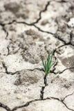 La hierba crece en suelo seco Imagen de archivo libre de regalías