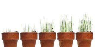 La hierba de observación crece Imágenes de archivo libres de regalías