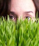 La hierba de observación crece Imagen de archivo