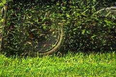 La hierba de siega vuela del cortacésped Imagen de archivo