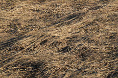 La hierba del año pasado seco Fotos de archivo