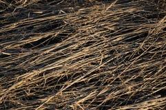 La hierba del año pasado seco Foto de archivo