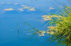 La hierba del agua Fotos de archivo libres de regalías