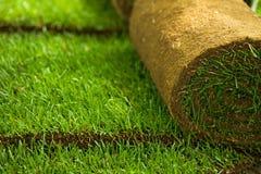 La hierba del césped rueda el primer fotos de archivo