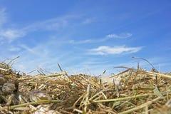 La hierba del heno seca el papel pintado amarillo del fondo del cielo azul de las nubes fotos de archivo