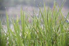 La hierba después de la lluvia Imagen de archivo libre de regalías
