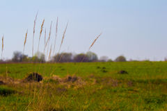 La hierba en el campo Foto de archivo