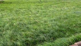 La hierba en el campo dobla debajo de un fuerte viento almacen de metraje de vídeo