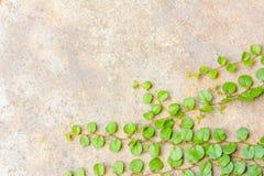 La hierba en el hormigón Fotos de archivo libres de regalías