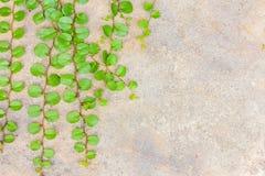La hierba en el hormigón Imagen de archivo