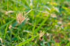 La hierba en el parque en el amanecer Foto de archivo libre de regalías