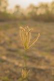 La hierba en el parque en el amanecer Fotografía de archivo