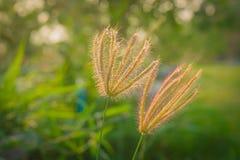 La hierba en el parque en el amanecer Imagen de archivo libre de regalías