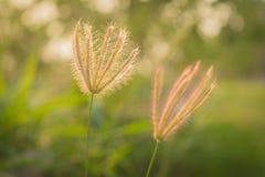 La hierba en el parque en el amanecer Fotografía de archivo libre de regalías