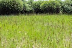 La hierba en el prado Imagenes de archivo